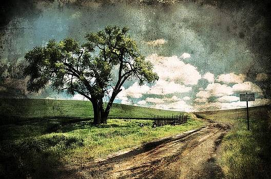 Summer Road In Spring by Doug Fredericks