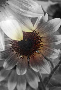 Sunflowers by Melissa Jones