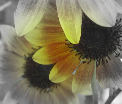 Sunflowers2 by Melissa Jones