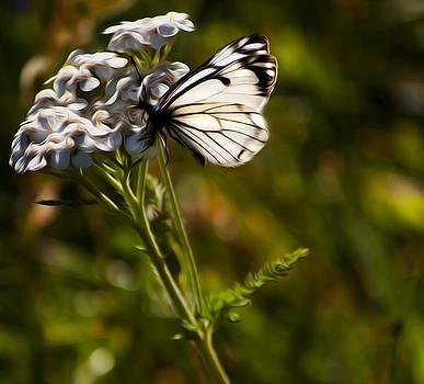 Sunlit Wings by Timothy Hack