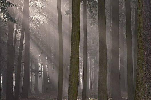 Sunrays Through the Fog #3 by Don Herd
