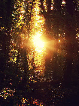 Sunset in the Woods by Patrick Horgan
