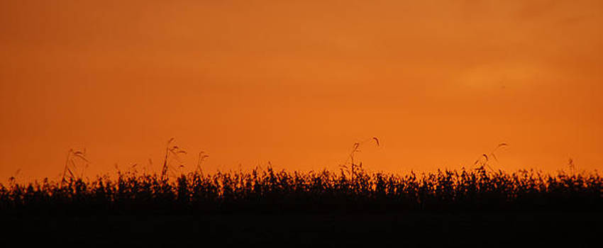 Sunset Over Soybeans by Peg Toliver