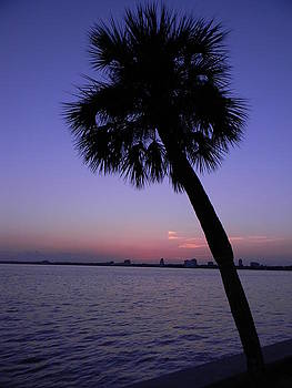 Sunset Palm Tree by Joanne Askew