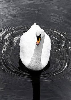Swan by Nick Field