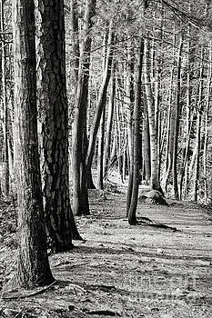 Tall Timbers  by A New Focus Photography