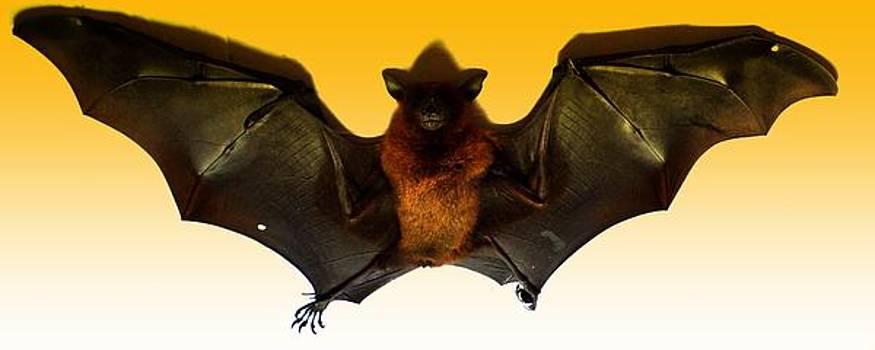 The Bat by Salman Ravish