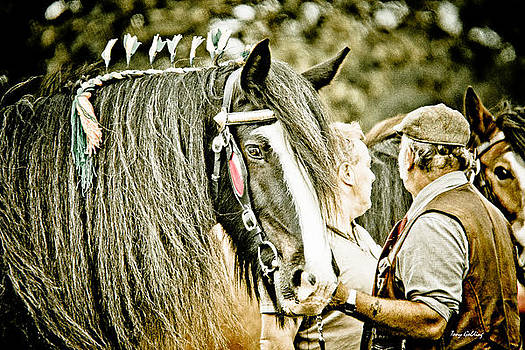 The Beautiful Shire Horse by Tony  Golding