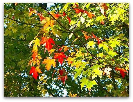 The Beauty of Autumn by Dianne  Lacourciere