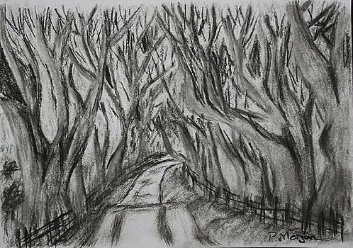 The Dark Hedges by Paul Morgan