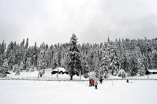 The Dazzle of Winter Trees at Gulmarg - Kashmir- India- Viator's Agonism by Vijinder Singh