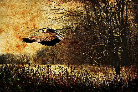 The Green Heron by Amanda Struz