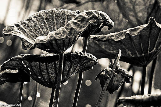 The lines on leafs and age by Kornrawiee Miu Miu