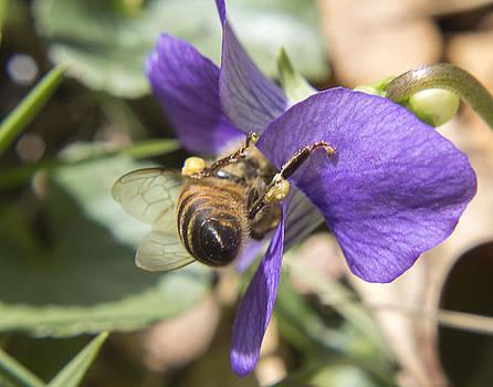 The Pollen Collector by Teresa Wissen
