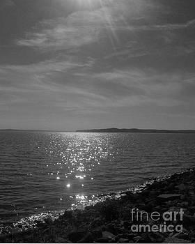 The Shore by Stacy Frett
