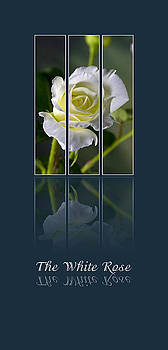 The White Rose by Sarah Christian