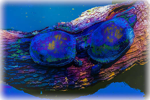 Tie Die Turtles by Renee Barnes