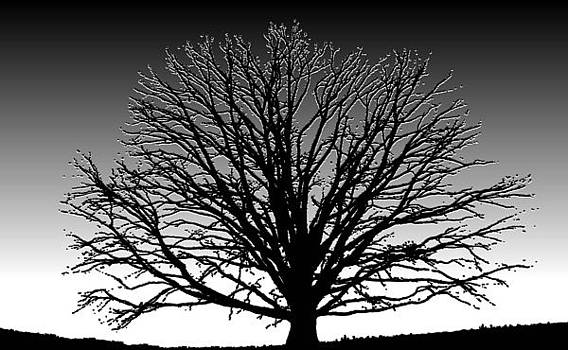 Tree at Dawn by Pam Clark
