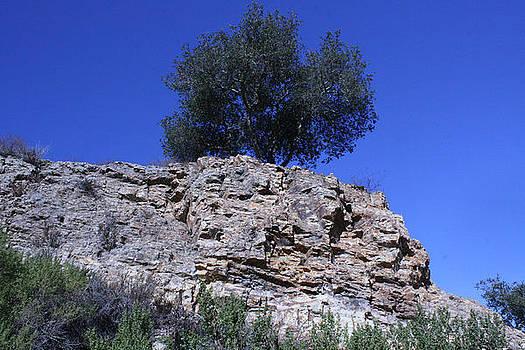 Tree Growing in Rock by Marsha Ingrao