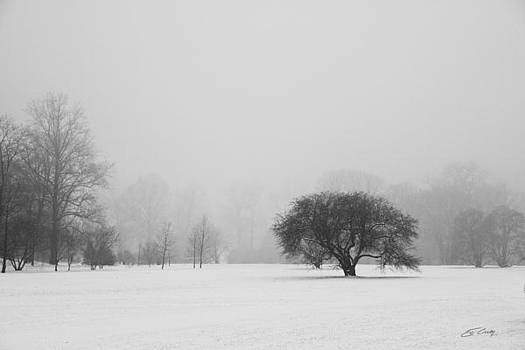 Tree in the Fog by Ed Cilley