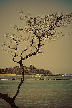 Tree of Anaehoomalu Bay by Rod Sterling