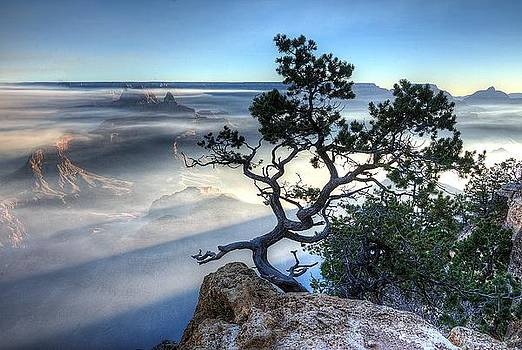Tree of the Canyon by Michael Misciagno
