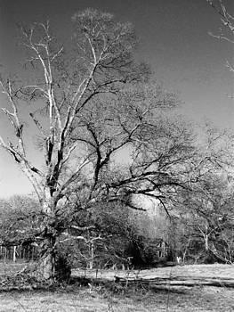 Tree Speaks by Ginger Wemett