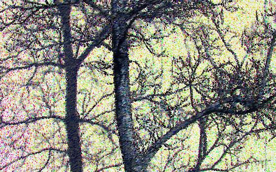 Trees by Bob Frase