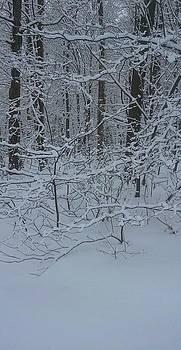 Trees In Snow by Rachel Tilseth