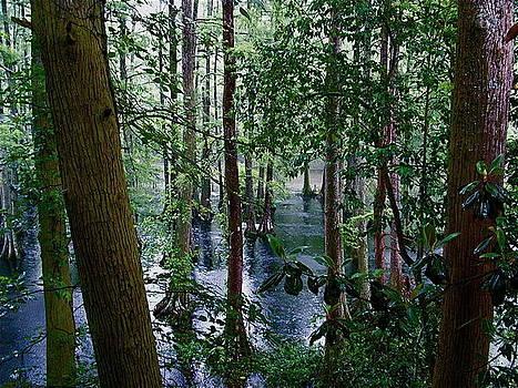 Trees by Nelson Watkins