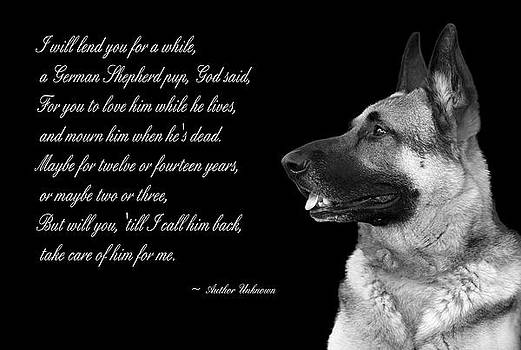 Tribute to German Shepard by Cecil Fuselier