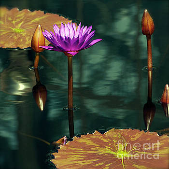 Tropical Waterlily Elegance by Byron Varvarigos