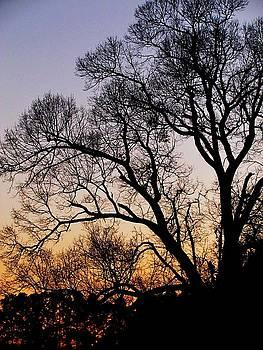Twilight Tree by Ginger Wemett