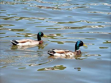 Twin Ducks by Julie Grace