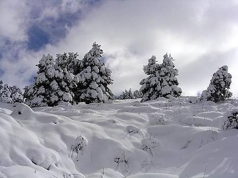 Under Snow by Faouzi Taleb