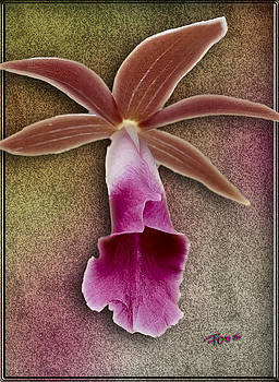Uniquely Orchid by Roy Foos
