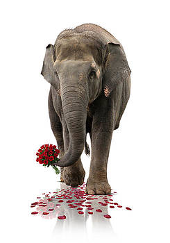 Valentin Elephant by Astrid Rieger