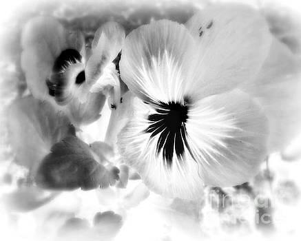 Viola Black And White by Ioanna Papanikolaou