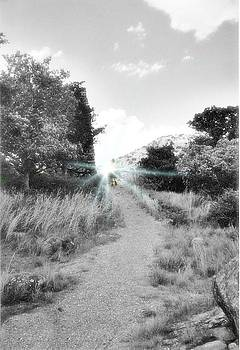 Walking Into The Light by Trevor Hilton