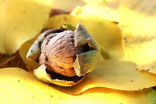 Wallnut by Cora Brum