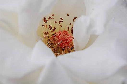 White all around by Jun Camus