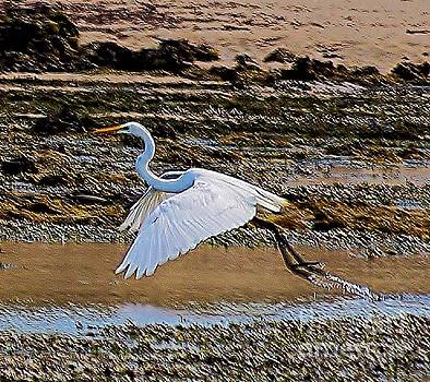 White Egret by Blair Stuart