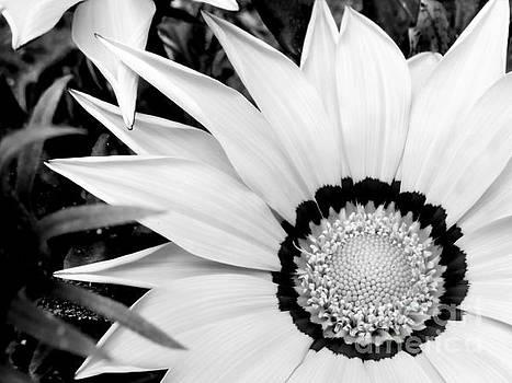 White Treasure Flower by Ioanna Papanikolaou