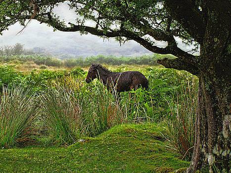 Wild Dartmoor Foal by Menega Sabidussi