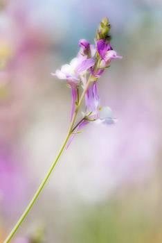 Wildflower beauty by Bill LITTELL
