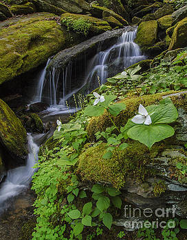 Wildflower Cascades by Ricky Smith