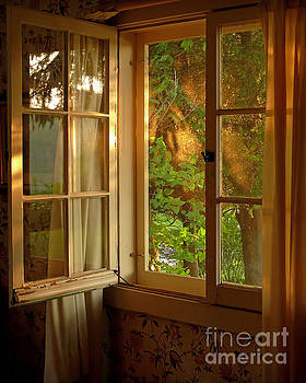 Window by Susan Kimball