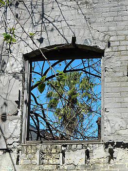Window to the World by Tara Miller