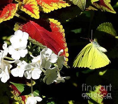 Wings in the Garden by Jinx Farmer