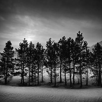 Winter forest by Frodi Brinks
